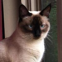 Tara's avatar