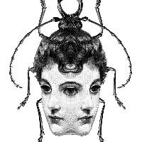 Lorina's avatar