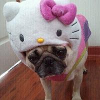 megedy's avatar