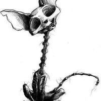 deadcat's avatar