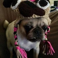 Puggy Mama's avatar