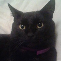 Marlena Wallace's avatar