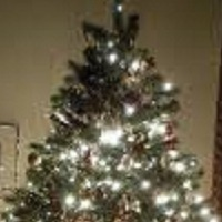 christmas tree's avatar