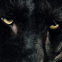 sithuthen's avatar