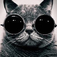 Celia's avatar
