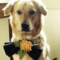 Cal's avatar