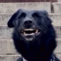Siberian Steaks's avatar
