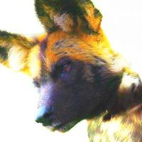 Devilwolf's avatar
