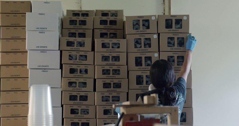 FILM_BugFarm.jpg