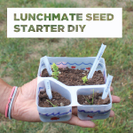 Lunchmate Seed Starter