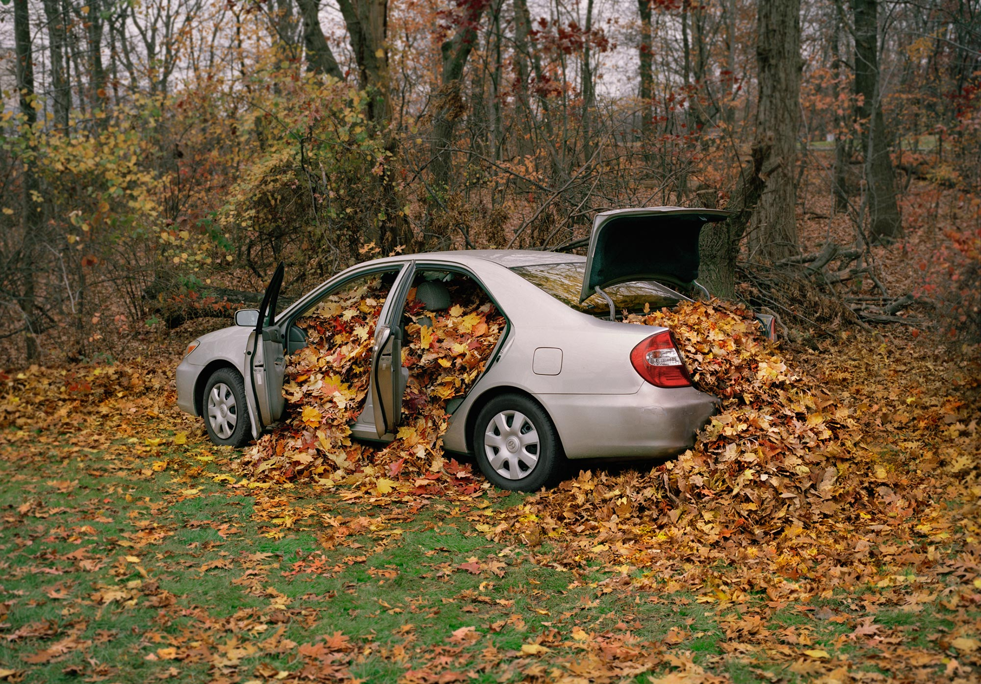 <i>My Father's Camry Filled with Leaves</i>