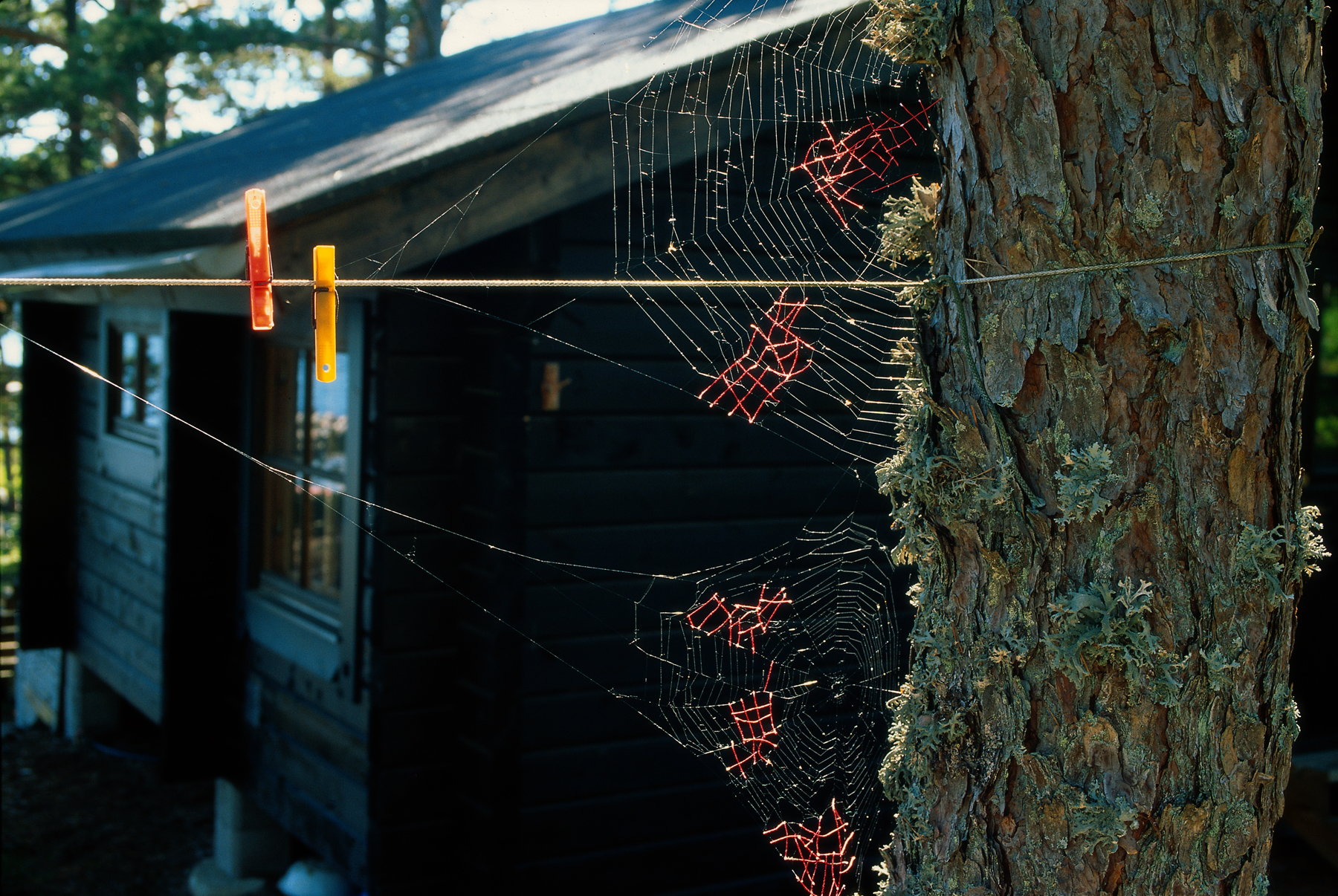 Mended%20Spiderweb%20%2319%20(Laundry%20Line).jpg