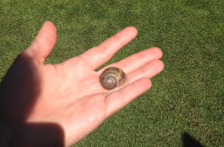 mexico-snail.jpg