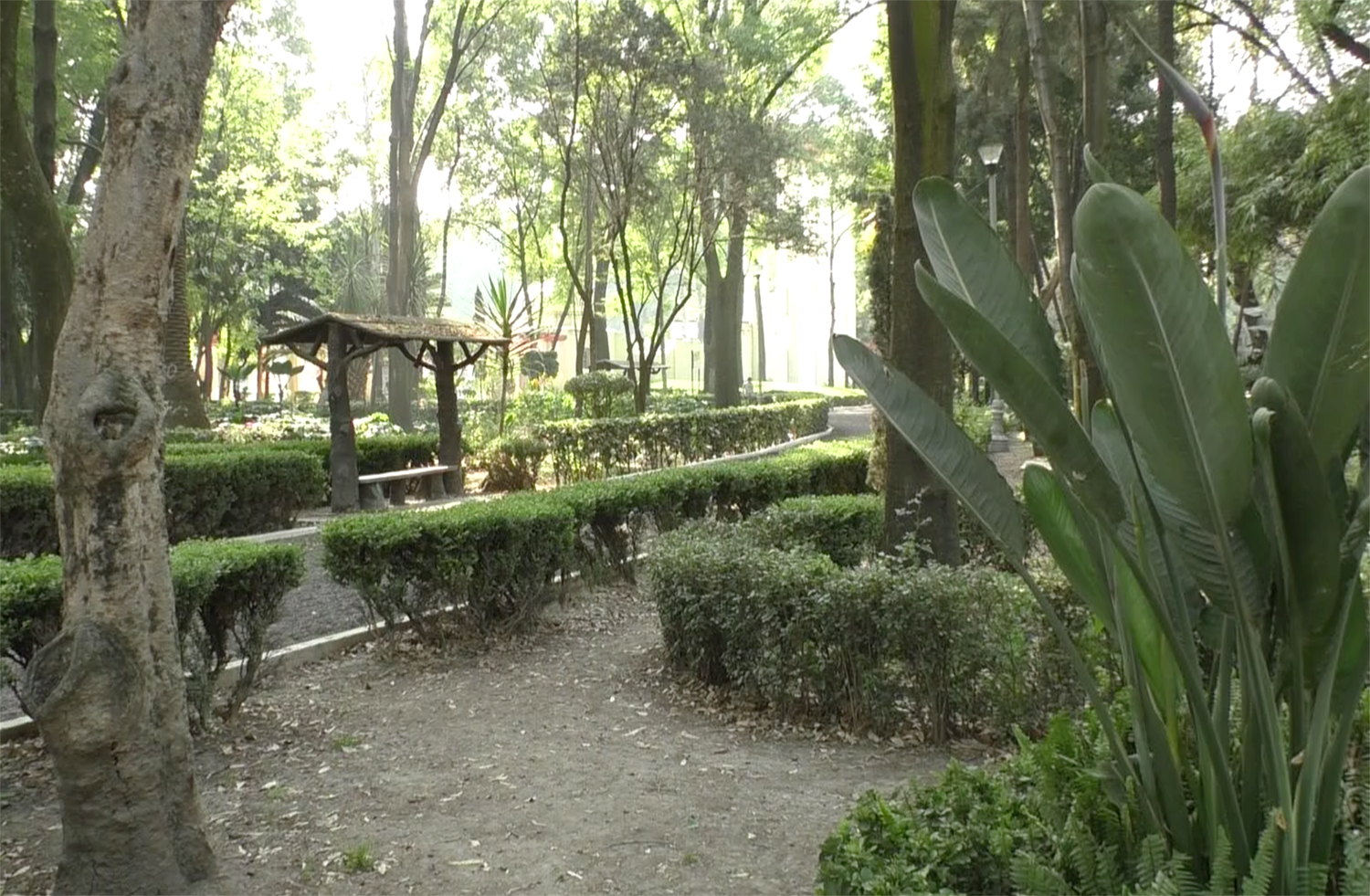 parque-mexico-green.png