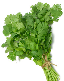 Thai food, coriander,cilantro,pak chee
