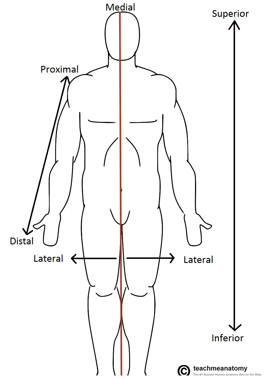 Anatomical Terms Of Location Anterior Posterior Teachmeanatomy