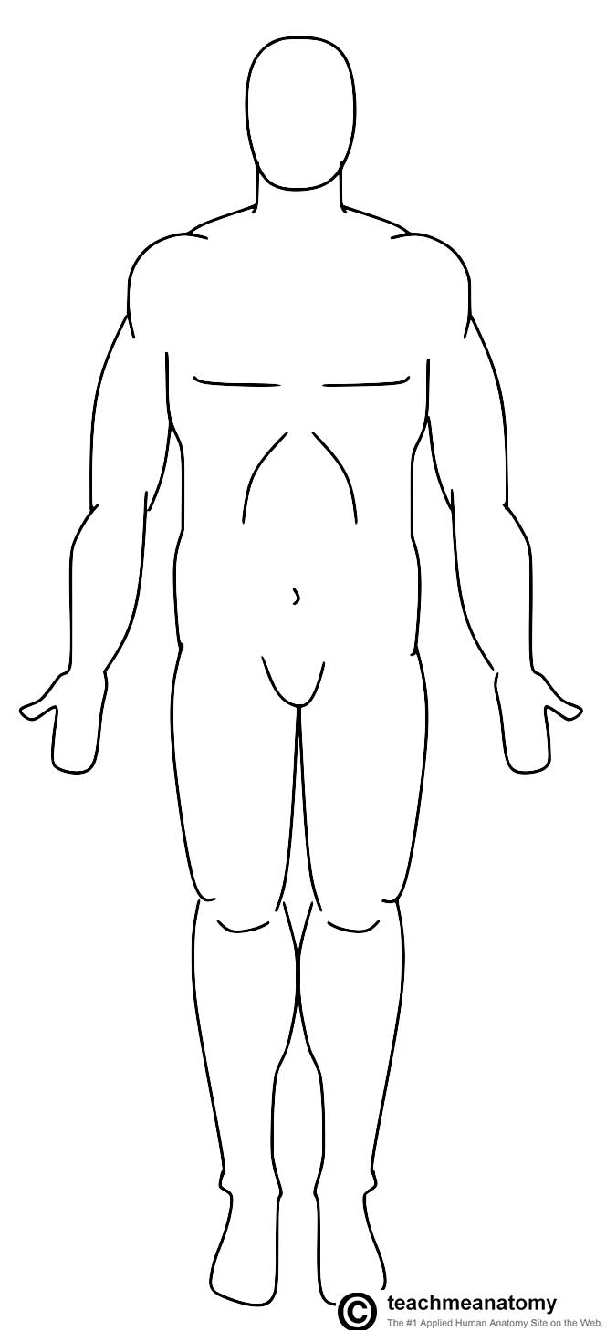 Fig 1.0 - The human anatomical position.