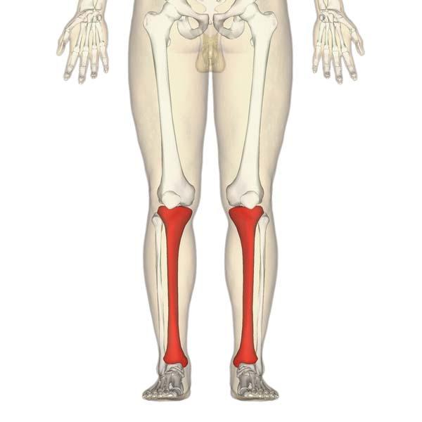 The Tibia - Proximal - Shaft - Distal - TeachMeAnatomy