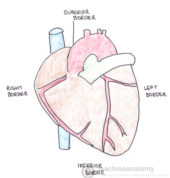 Surface Anatomy Of The Heart Teachmeanatomy