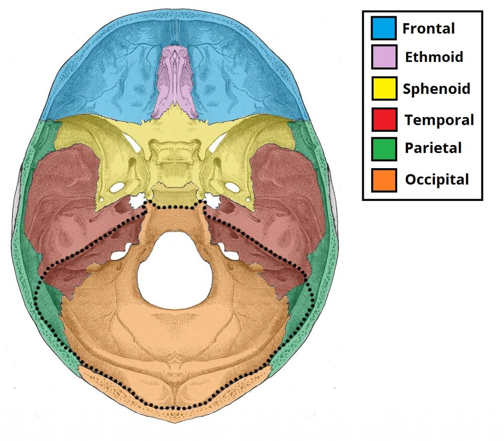 Posterior Cranial Fossa Boundaries Contents Teachmeanatomy