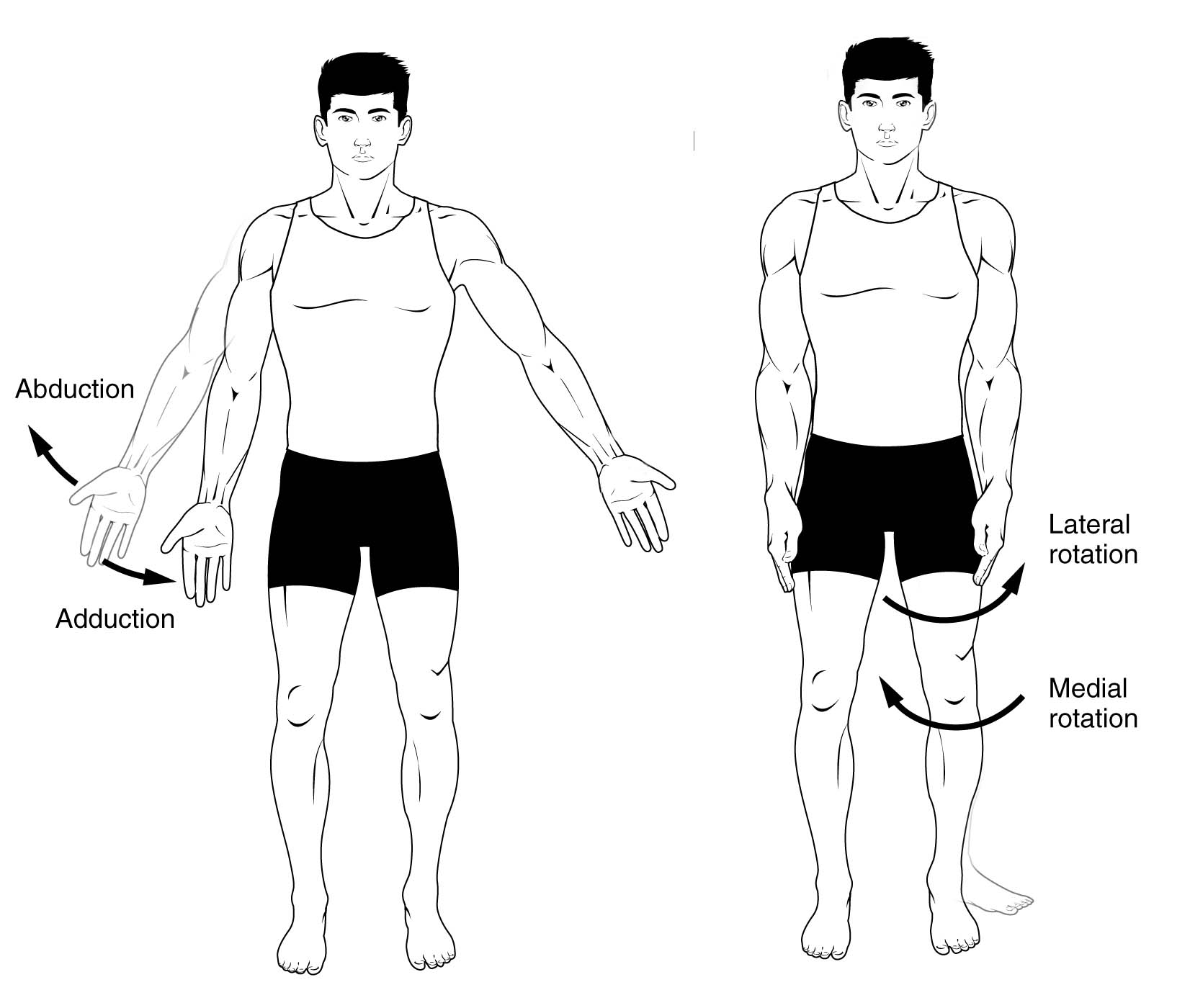 Anatomical Terms Of Movement Flexion Rotation Teachmeanatomy