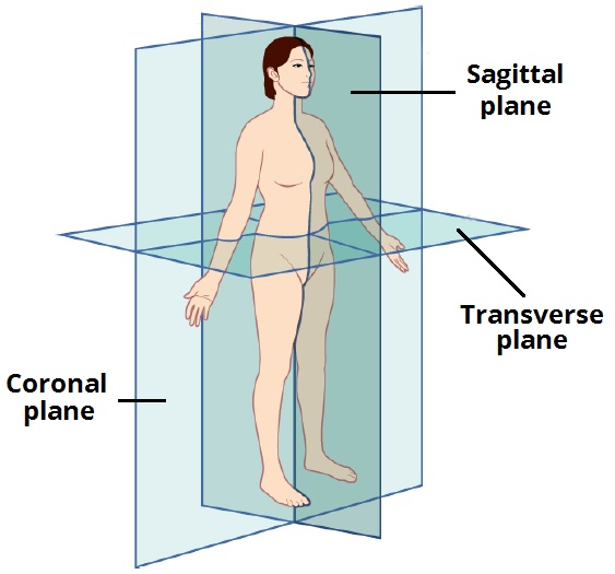 anatomical planes coronal sagittal teachmeanatomy