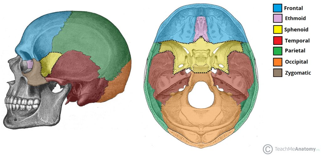Sphenoid Bone Location Structure Function Teachmeanatomy