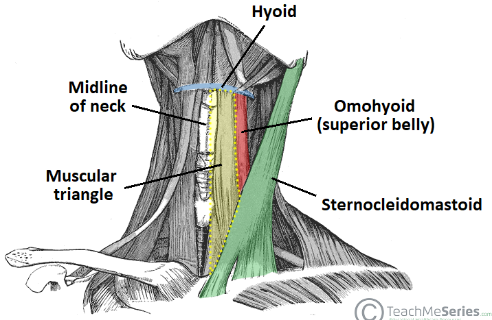 Anterior Triangle of the Neck - Subdivisions - TeachMeAnatomy