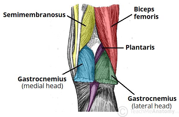 popliteal surface of femur
