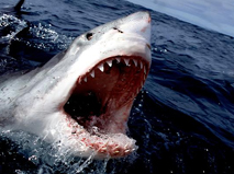 Gizli Görünmez Katil Köpek Balıkları