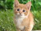 Küçük Kitty