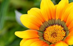 Sharing Spring flower photos header