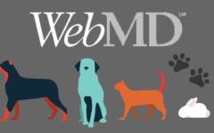 WebMD for Pets header
