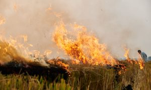 Farmers burning field to prepare for planting