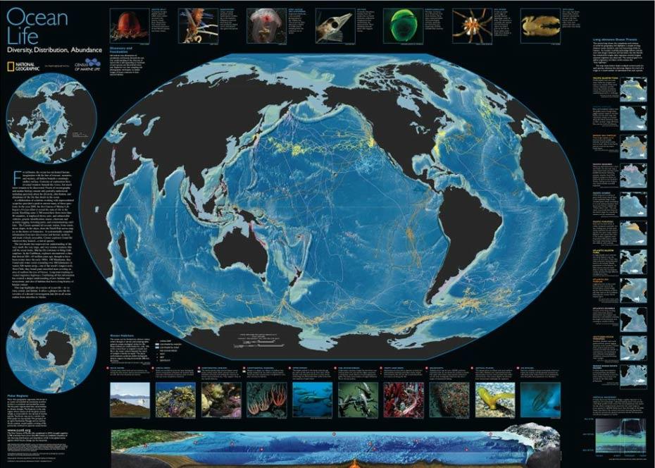Ocean Diversity