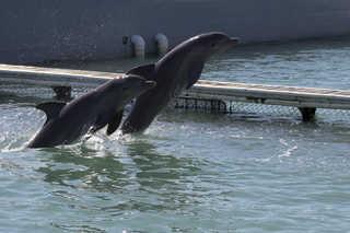 Aquatic animals 0013