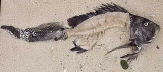 Aquatic animals 0015