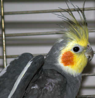 Birds 0007