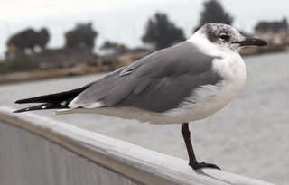 Birds 0022