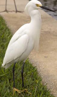 Birds 0025