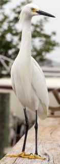 Birds 0026