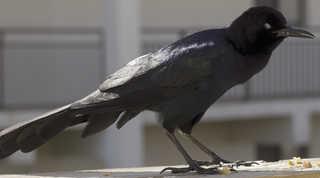 Birds 0027