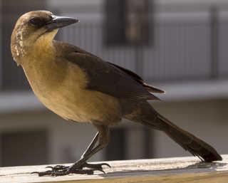 Birds 0028