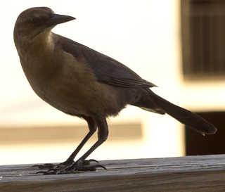 Birds 0029