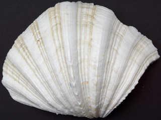 Shells 0002