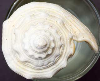 Shells 0011