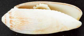 Shells 0014