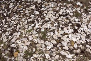 Shells 0019