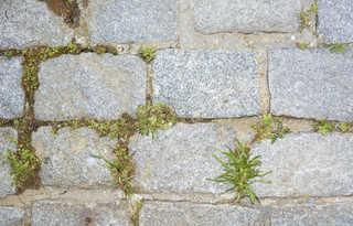 Brick patios 0021
