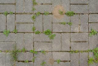 Brick patios 0031